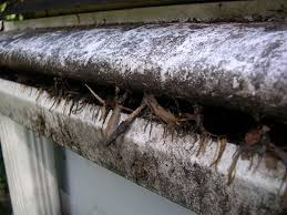 clogged gutters cause big problems