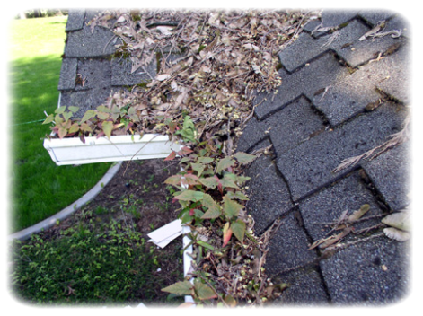 how often clean gutters