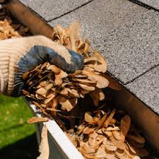 seed pods in gutter