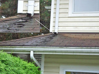 downspout shingle damage