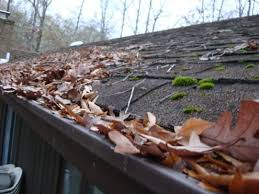 gutter debris accumulation